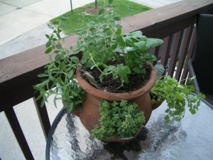 Herbs grown in a strawberry pot