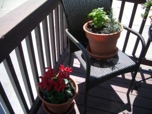 Cyclamen & Basil/Rosemary Herbs