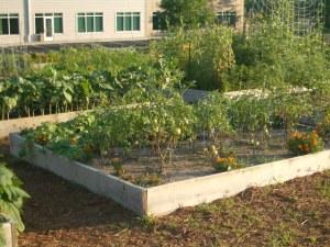 The garden next to mine